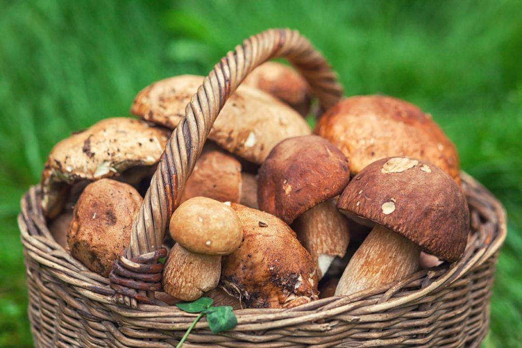 корзина грибів