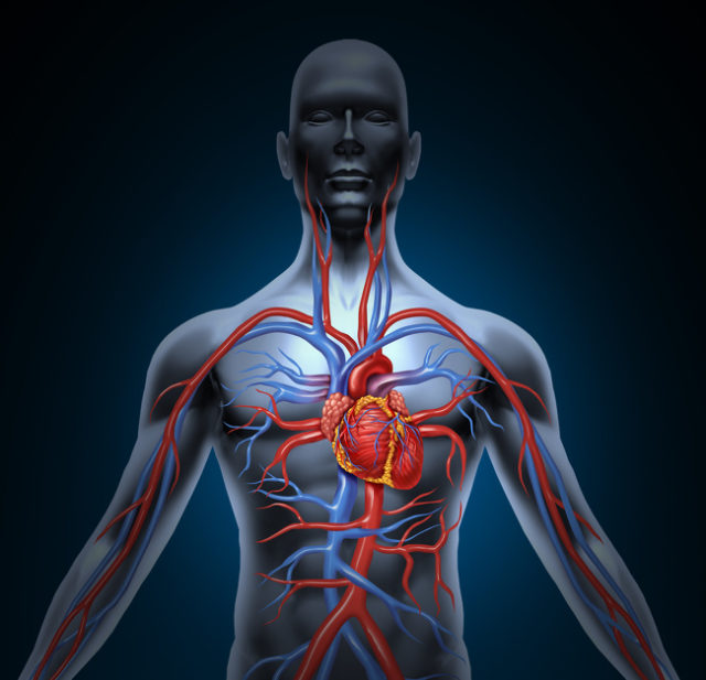 Профілактика серцево-судинних захворювань