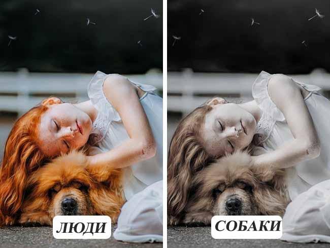 Як бачать світ собаки