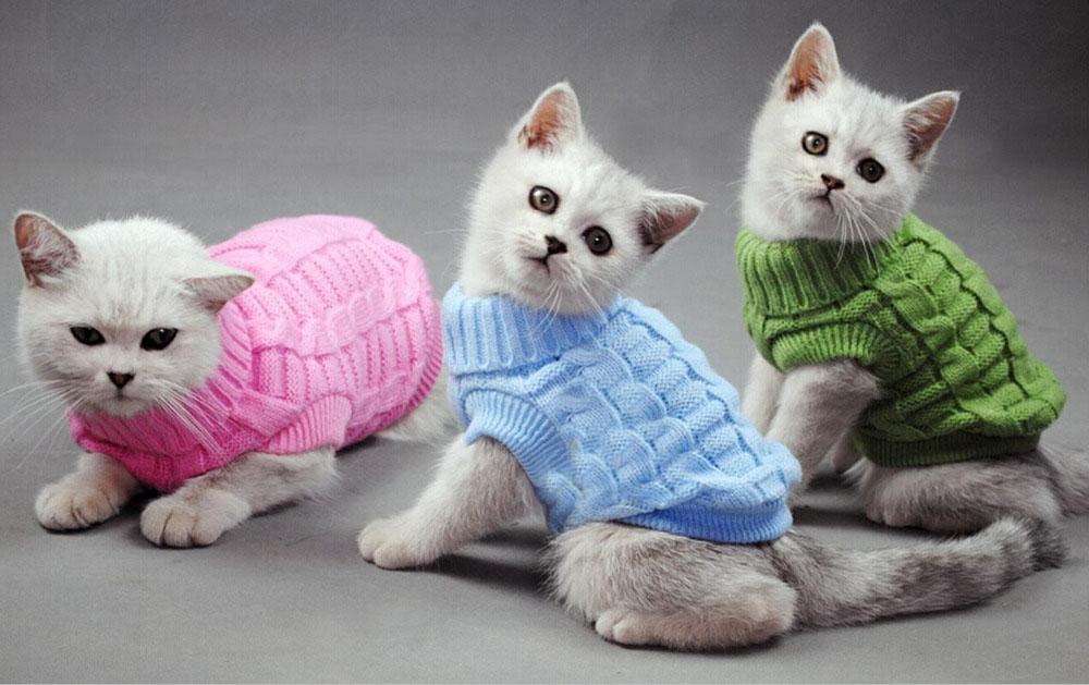 Одяг для котів